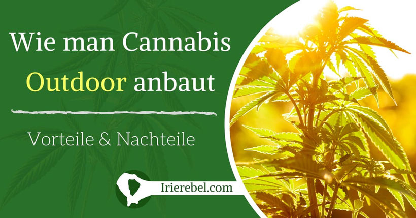 Wie man Cannabis Outdoor (im Freien) anbaut & die Vorteile davon