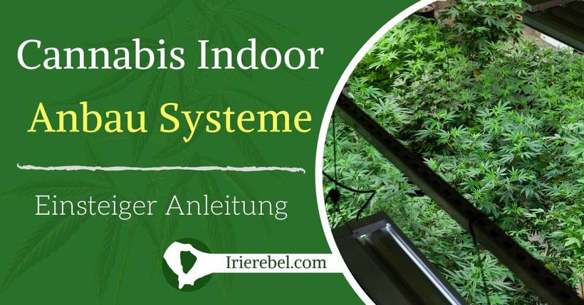 Cannabis Indoor Anbau Systeme - Einsteiger Anleitung