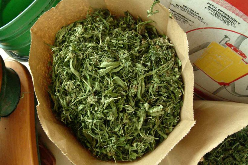 Lufttrocknung der Cannabis Blätter
