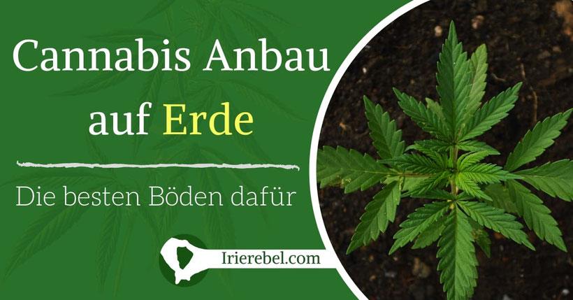 Cannabis Anbau auf Erde