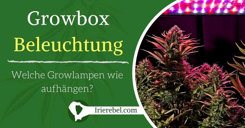 Growbox Beleuchtung – Welche Growlampen wie aufhängen