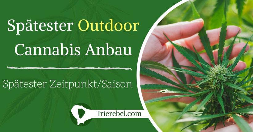 Der späteste Zeitpunkt um Outdoor Cannabis anzubauen