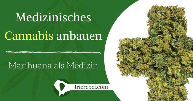 Medizinisches Cannabis anbauen - Marihuana als Medizin