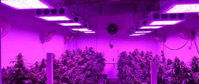Abstand von LED Growlampen