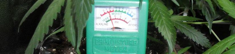 Wurzel pH Wert