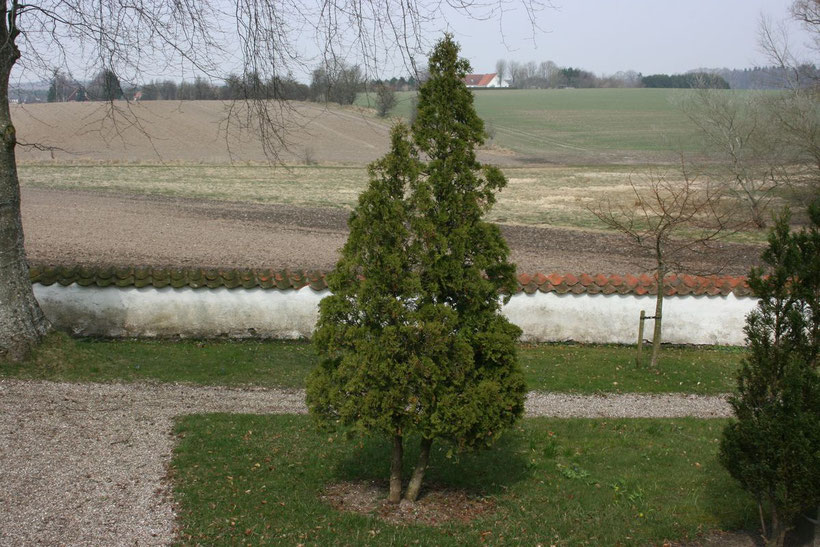Billig træfældning - Få 3 gratis tilbud