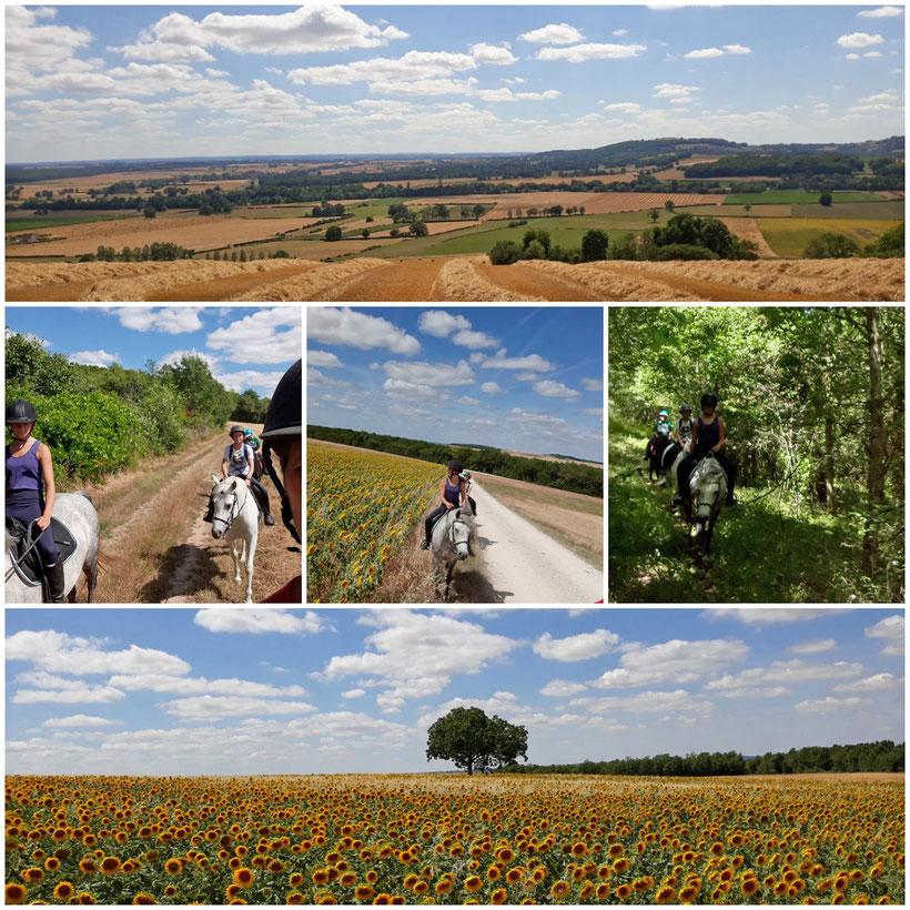 De magnifiques balades à cheval et à poney à proximité de Montbard et Semur en Auxois