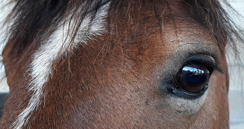 Des poneys au grand coeur pour les plaisir des enfants