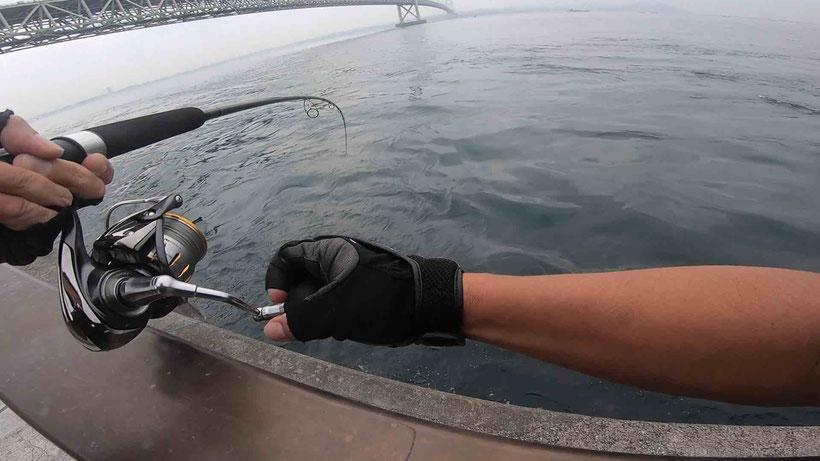 ツバス 明石海峡淡路島サイド 激投ジグで青物ヒラマサ(?)獲った