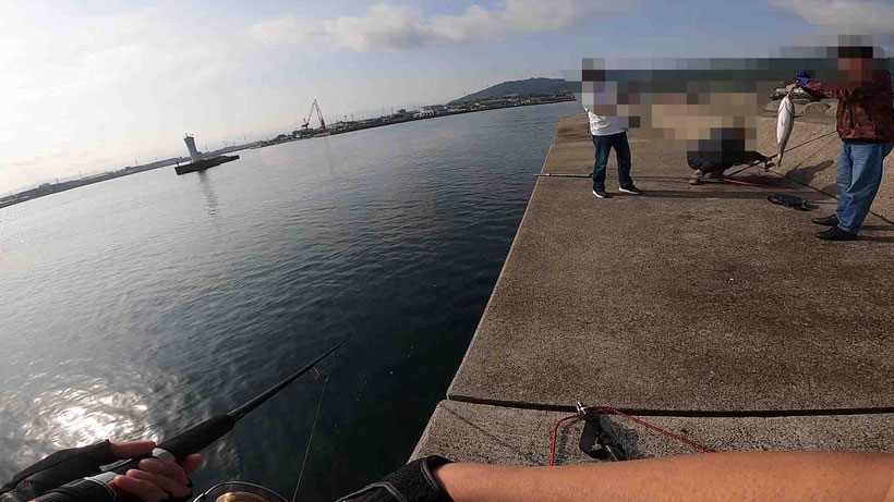 淡路島 湊港のメジロ祭りで良型ゲット