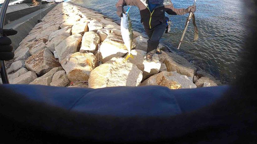 兵庫県の南芦屋浜で青物ブリをショアジギングで釣った