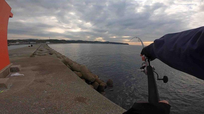 淡路島 郡家漁港で青物メジロをセットアッパーで釣り上げた
