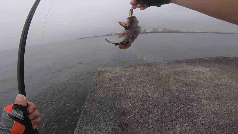 川崎新堤1番 シーバス狙いがジグサビキで五目釣り(カサゴ・アジ・サバ)