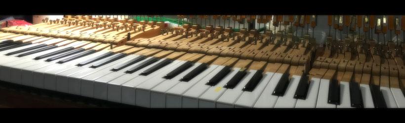 鍵盤高さ調整中のグランドピアノ鍵盤
