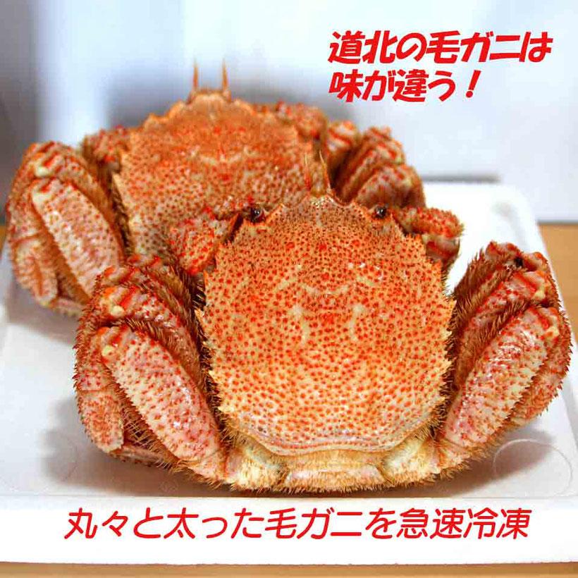北海道の毛ガニ漁は季節により解禁場所が違います