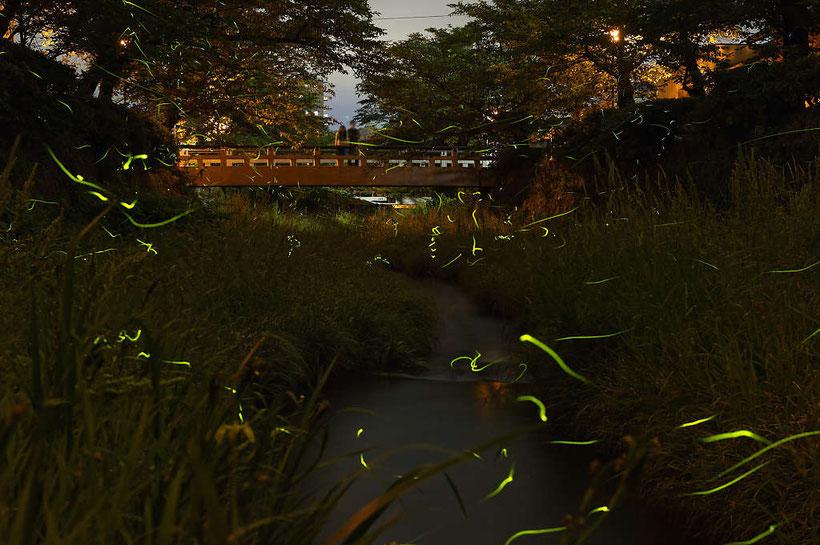 PHOTO:河野康志会員