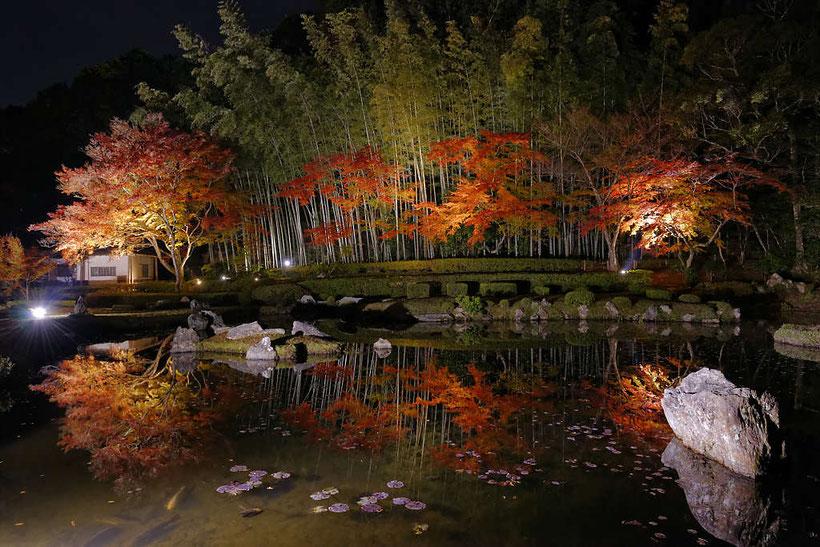 常栄寺雪舟庭の紅葉ライトアップ PHOTO:河野康志会員