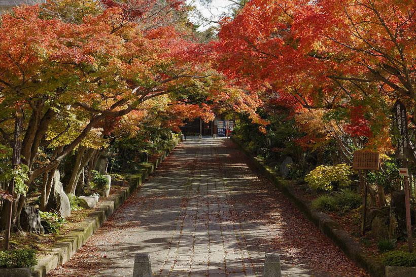 龍福寺の紅葉 PHOTO:河野康志会員
