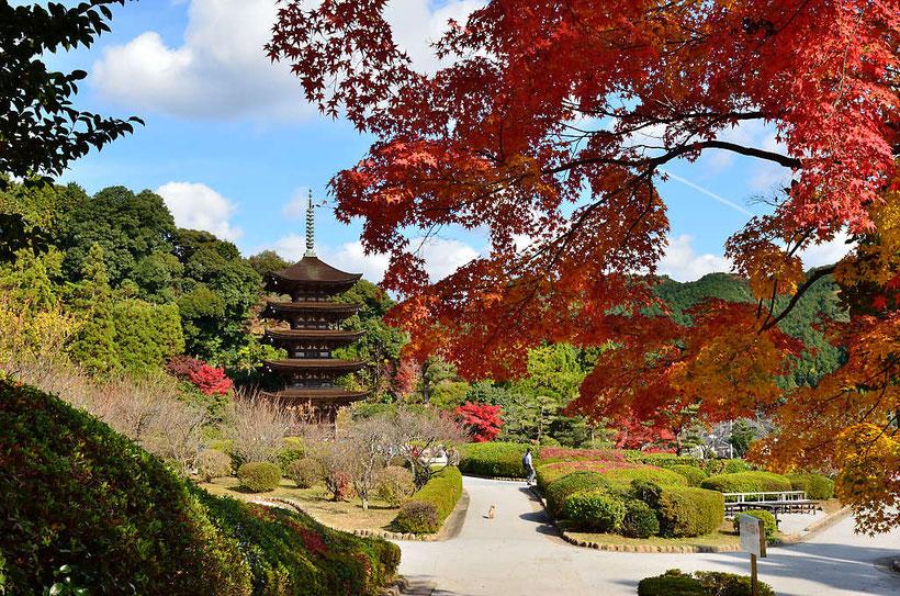 香山公園の紅葉 PHOTO:河野康志会員