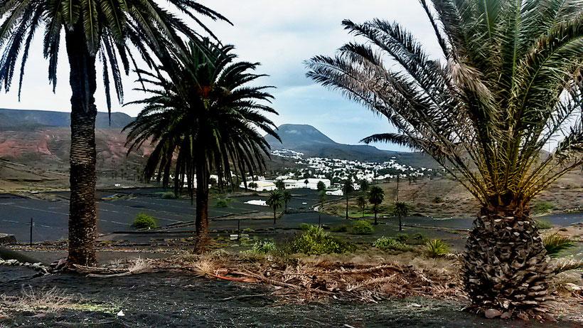 Tal der 1000 Palmen
