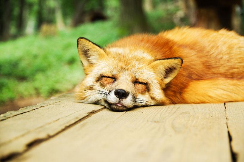 Riposati prima di stancarti, non dormire solo di notte, il dr. Lavanga suggerisce il sonno intelligente.