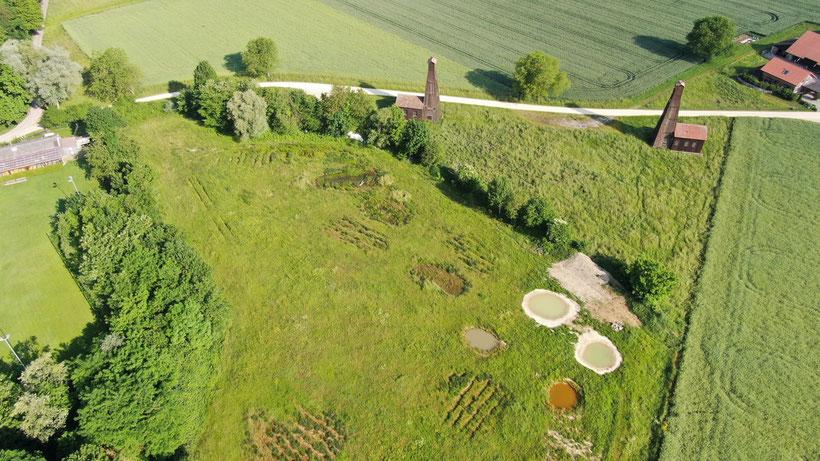 Naturschutzgebiet Neumatt in Rheinfelden. Flache Teiche für Amphibien. Störche können hier oft beobachtet werden.