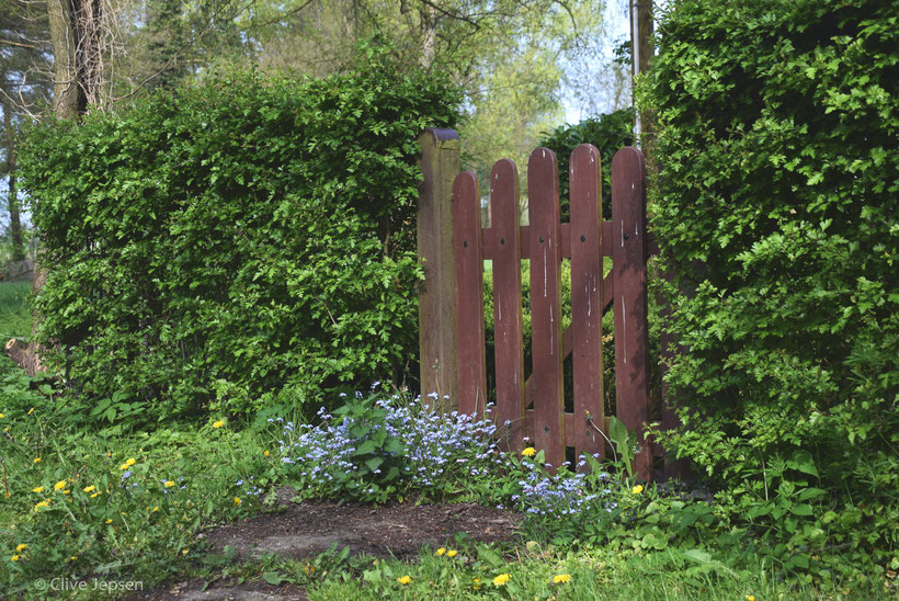 Ein Tor, was lange nicht benutzt wurde. Schon wachsen Blumen davor.