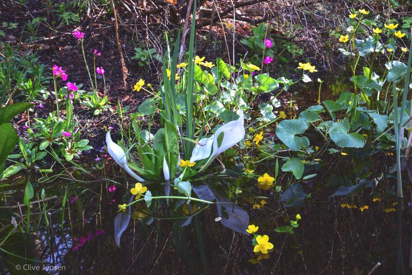 Blumen Pracht am Waldsee vom Rhodo Park Bruns in Gristede