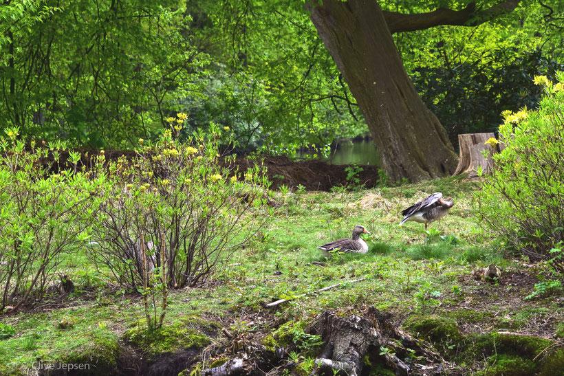 Frühling in Rastede mit frischem Grün.