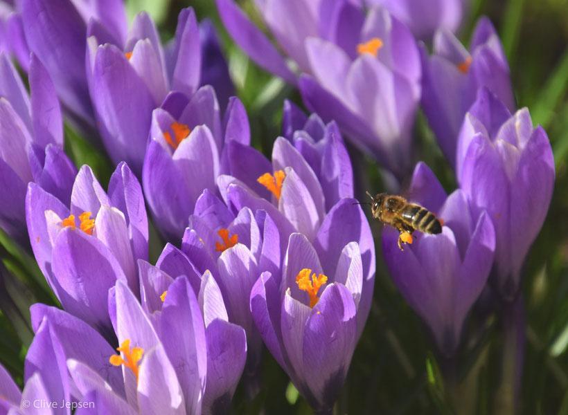 Die Arbeit der Bienen fängt wieder an.