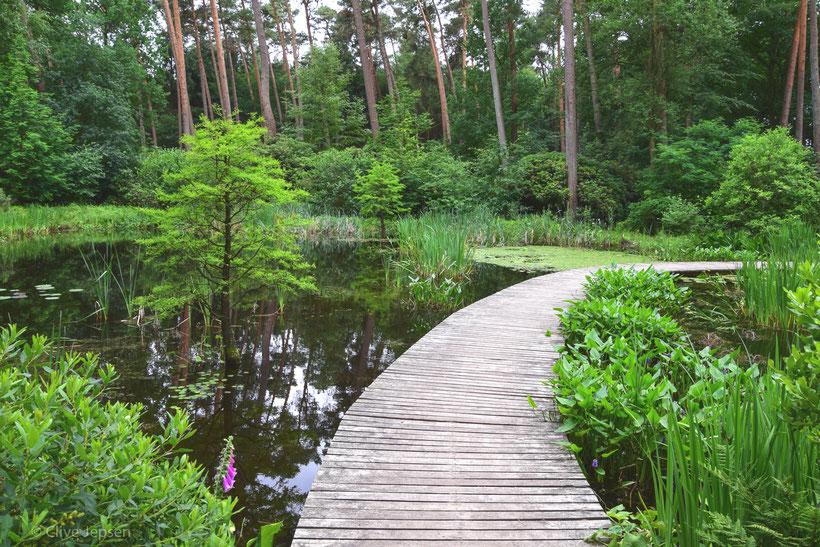 Mein Lieblingsplatz am Teich im Rhodo-Park Gristede wenn ich Frösche und Libellen fotografieren möchte.