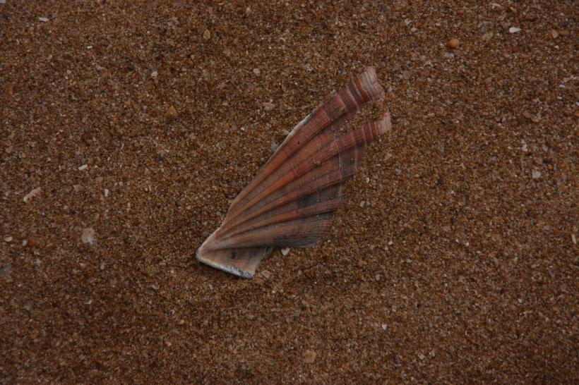Die Felsküste der West-Algarve