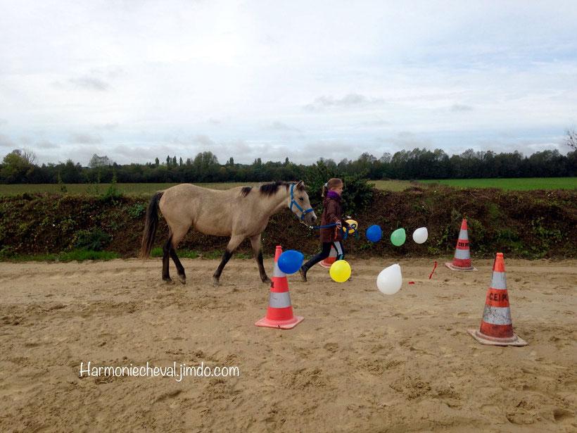 désensibilisation habituation cheval équitation alternative émotions
