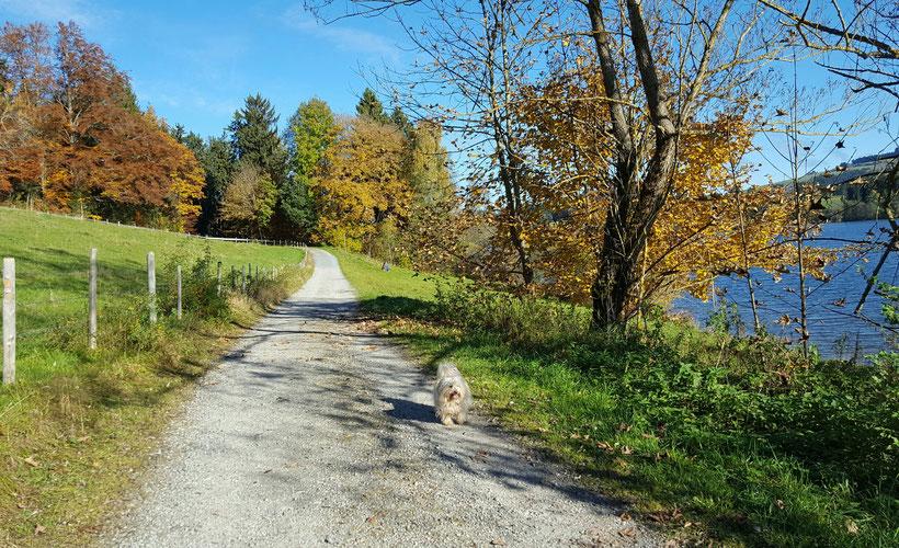Spaziergänge im goldenen Herbst