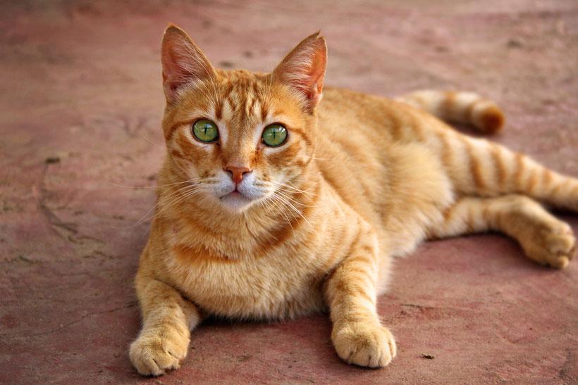 Meow. Adorable street cat.. soo cute! Jerusalem, Israel © Sabrina Iovino | JustOneWayTicket.com