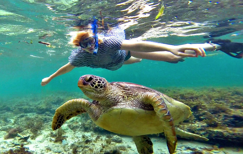Snorkeling with Turtles in Apo island | 20 Photos of the Philippines that will make you want to pack your bags and travel © Sabrina Iovino | JustOneWayTicket.com
