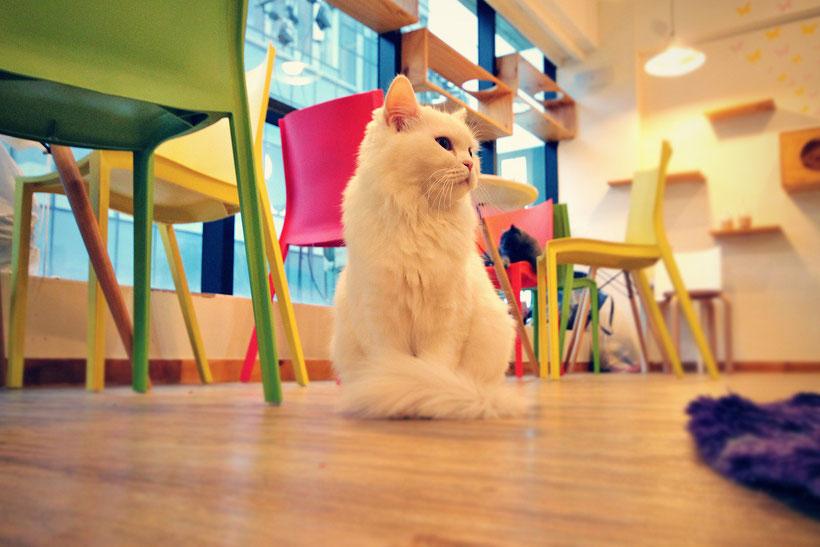 A Day in a Cat Café in Seoul, South Korea © Sabrina Iovino | JustOneWayTicket.com