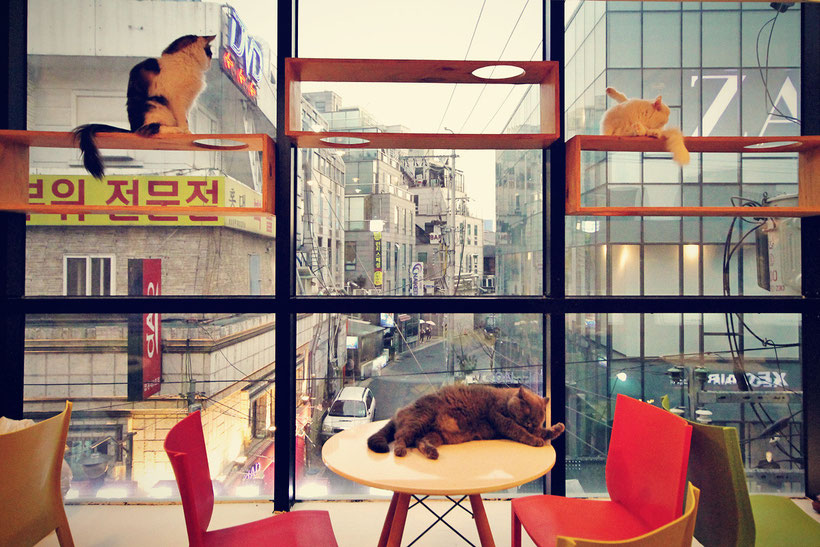 A Day in a Cat Café in Seoul, South Korea © Sabrina Iovino | JustOneWayTicket.com