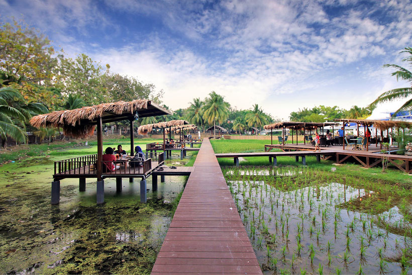 Get lost in the picturesque rice paddies | One of 10 Fun Things and Activities to do in Langkawi, Malaysia © Sabrina Iovino | via @Just1WayTicket