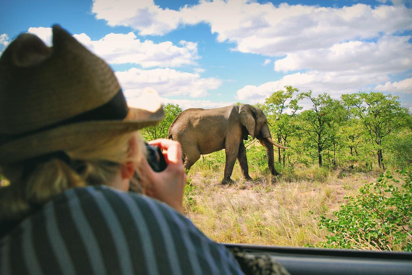 Watching elephants at Kruger National Park | Where to find the big 5 - The Ultimate Guide to Wildlife Safari in South Africa | via @Just1WayTicket | Photo © Sabrina Iovino