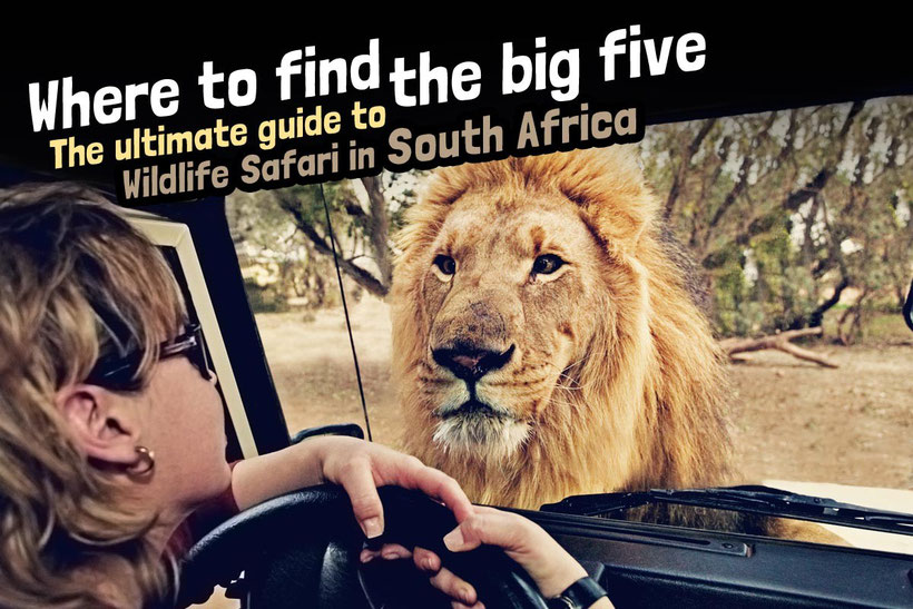 Where to find the big 5 - The Ultimate Guide to Wildlife Safari in South Africa | via @Just1WayTicket | Photo © Martin Harvey / Alamy