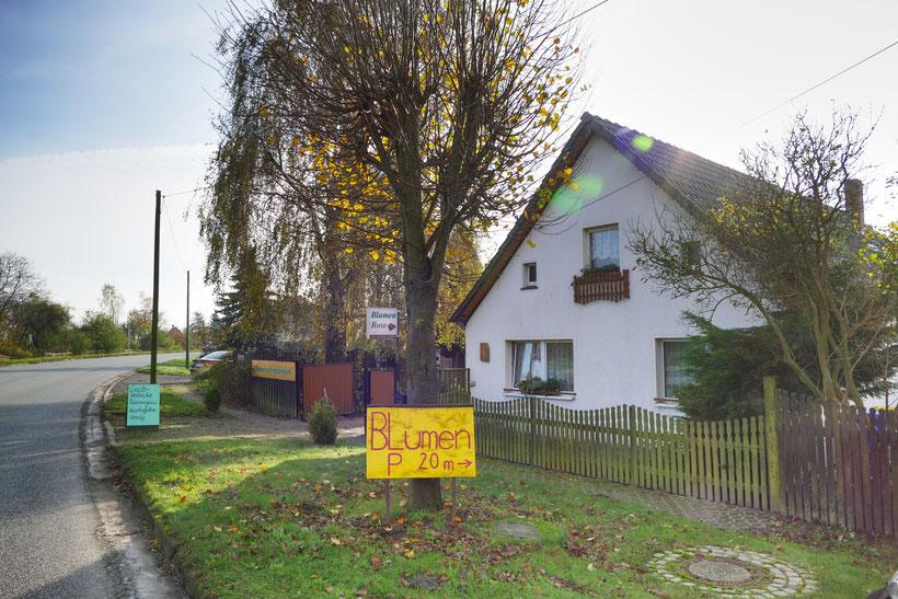 Blumen-Rose | Lindenstraße 49 in Segeletz