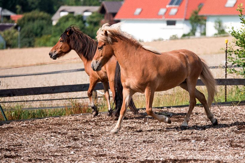 Horse Speak Kurs mit Kirsti Ludwig, Sharon Wilsie, Pferdesprache lernen, Pferd verstehen, Sprachkurs Pferd in Deutschland, Bayern, Beziehung zum Pferd