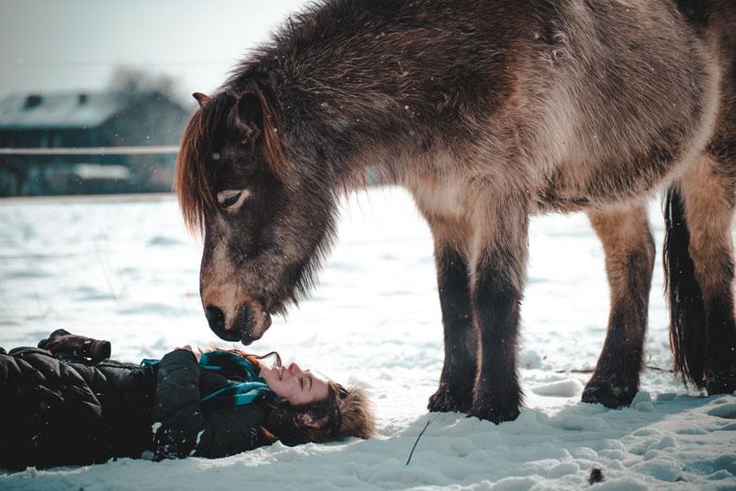 Pferd, Winter, Bodenarbeit, Pferd-mensch beziehung, Beziehung verbessern