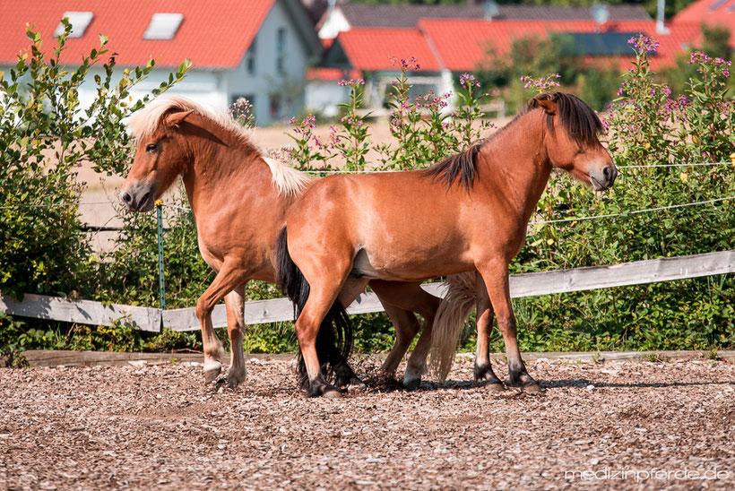 Horse Speak Kurs mit Kirsti Ludwig, Sharon Wilsie, Pferdesprache lernen, Pferd verstehen