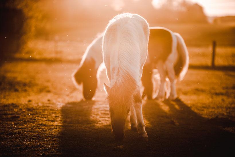 Meditation in der Pferdeherde, Pferd unreitbar, nicht reiten, Beziehung zu Pferd verbessern, Entspannt beim Pferd, Stressfrei
