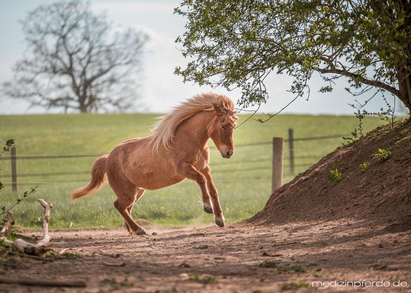 Fellwechsel Pferd, Tipps, gesundes Pferd, gesund füttern, fit durch den Fellwechsel, Putzsachen reinigen
