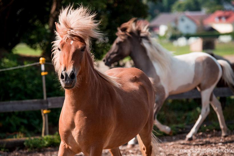 Pferdeverhalten, Pferdesprache, Sharon Wilsie, Sprachkurs Pferd, Horse Speak Seminar, Herde