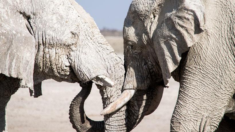 Elefanten Etosha National Park Namibia