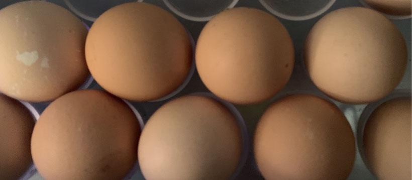 Spring eggs.